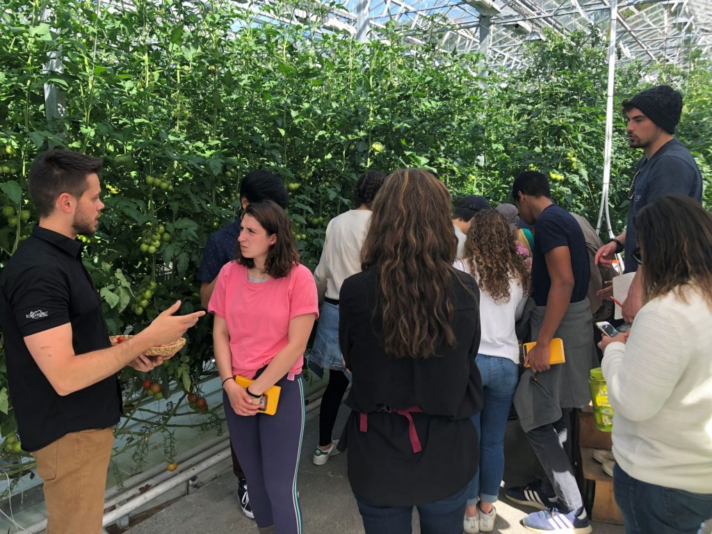 Students look at tomato plants in a greenhouse.