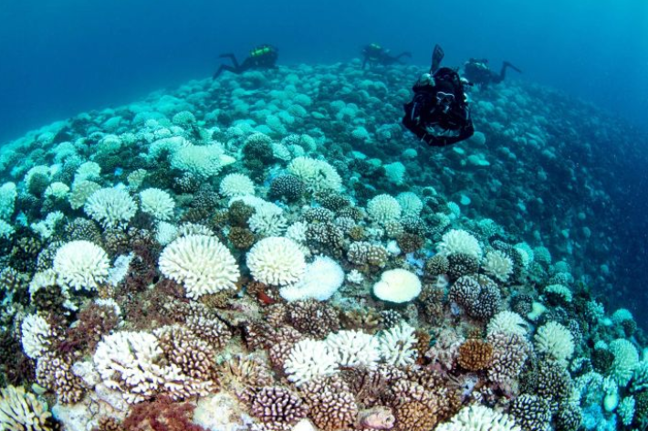 Coral colonies find ways to fight climate change